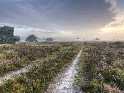 "Day-trips National Park ""de Veluwe"""